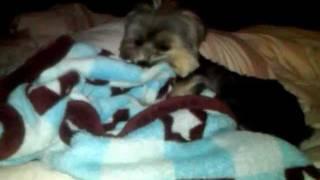 Puppy's Bedtime Blanky Tszuj