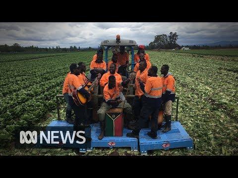 Sweet sounds of Vanuatu's seasonal workers   ABC News