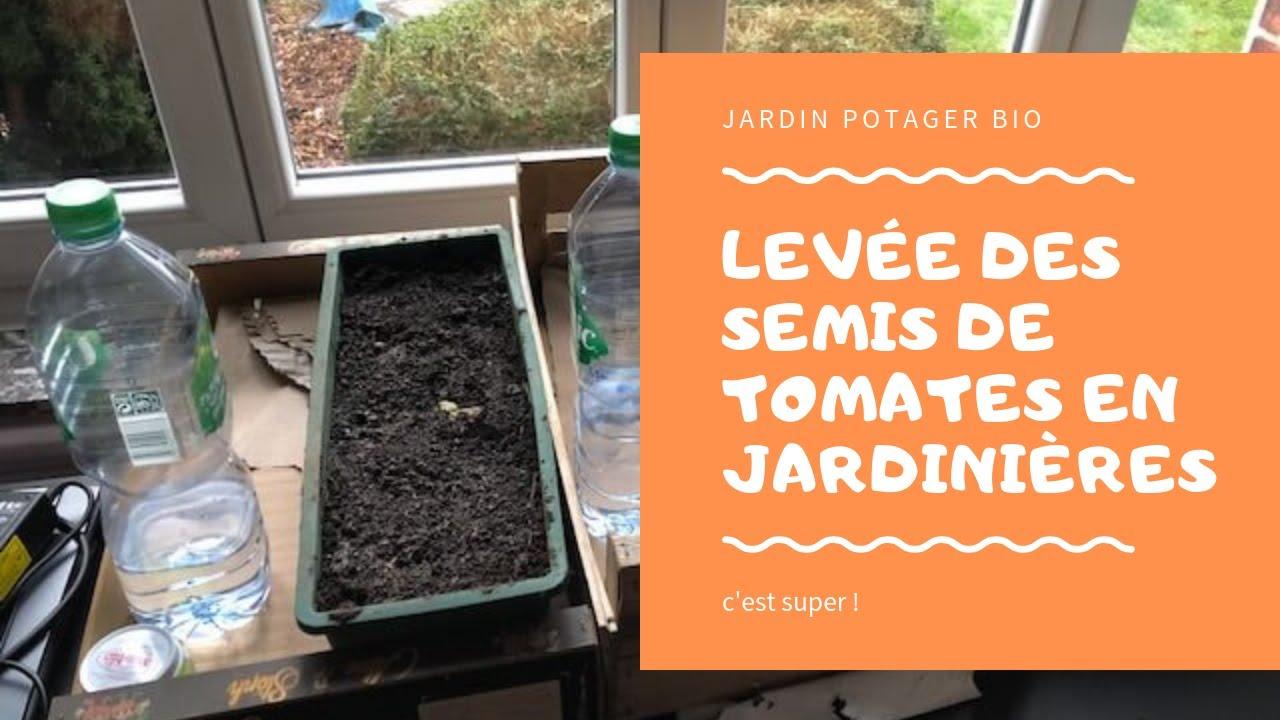 Semis De Tomates 2018 2019 En Jardiniere Genial