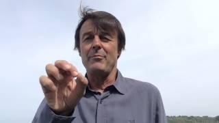 """Pesticides néonicotinoïdes """"tueurs d'abeilles"""" : les leçons d'un premier bras de fer pour l'écologie"""