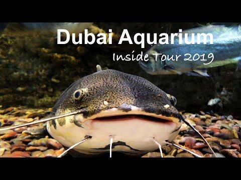 Dubai Aquarium Inside Tour | Underwater Zoo | Dubai Travel vlog 2019