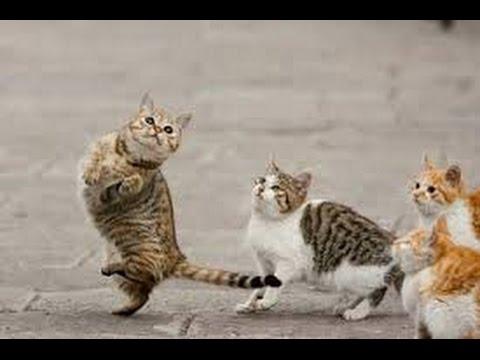 The Kitty Cat Dance hindi