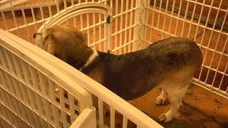 Senior Dog Gathering Room Cam 01-18-2018 15:24:05 - 16:24:06