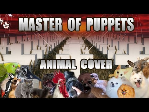 Must See Popular Videos | Plugged In - Metallica's Master of Puppets Made with Animal Noises