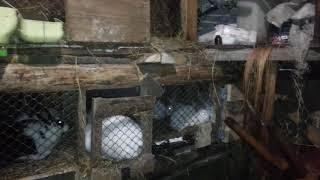 Собака и кот съели крольчат