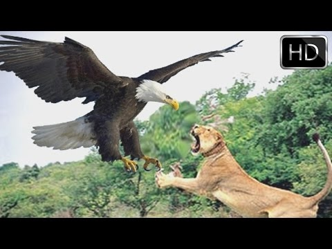 The Most Powerful Birds in the World - National Geographic Documentary