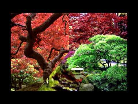 Jardines Orientales Hd 3d Arte Y Jardiner A Dise O De
