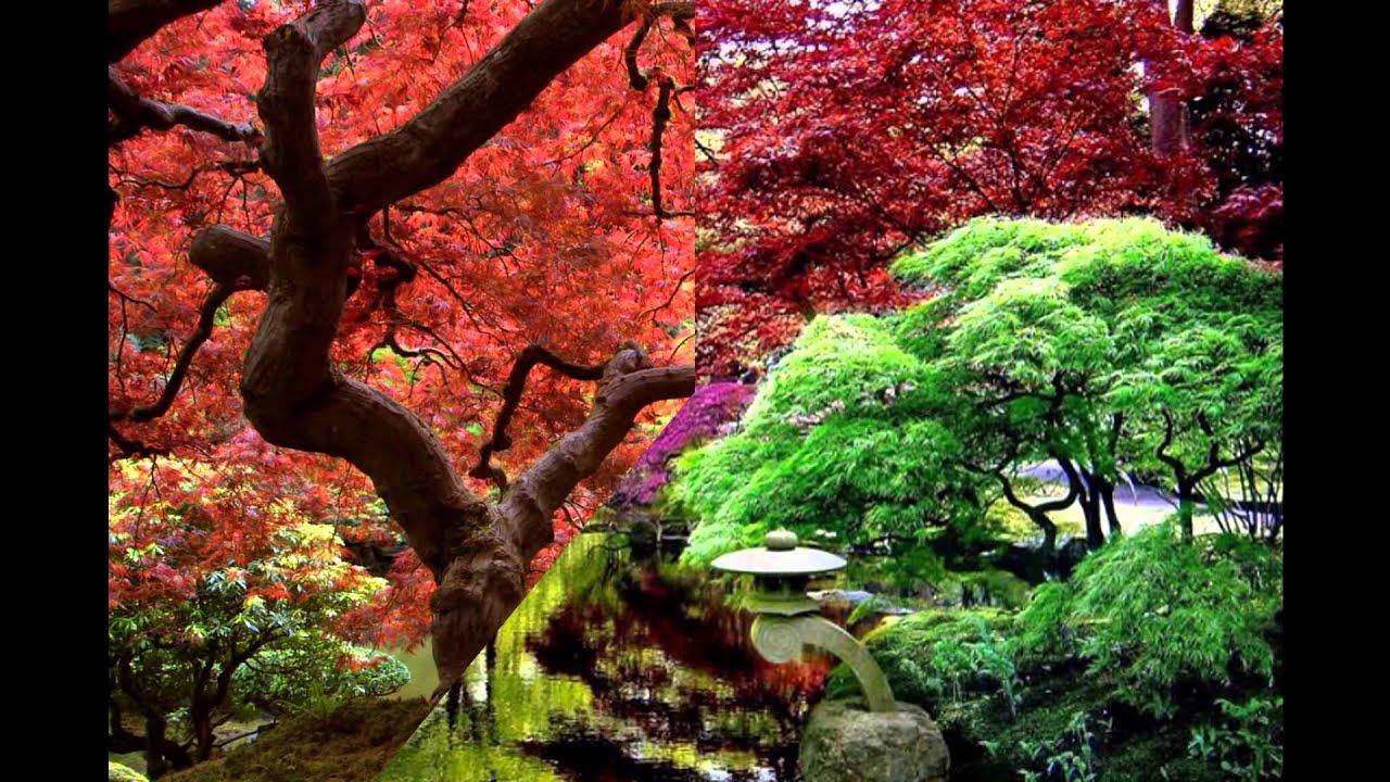 Jardines orientales hd 3d arte y jardiner a dise o de for Diseno de jardines 3d