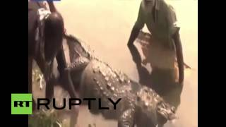 Bangladesh: Too many goats! Obese 100-yr-old croc dies from overeating