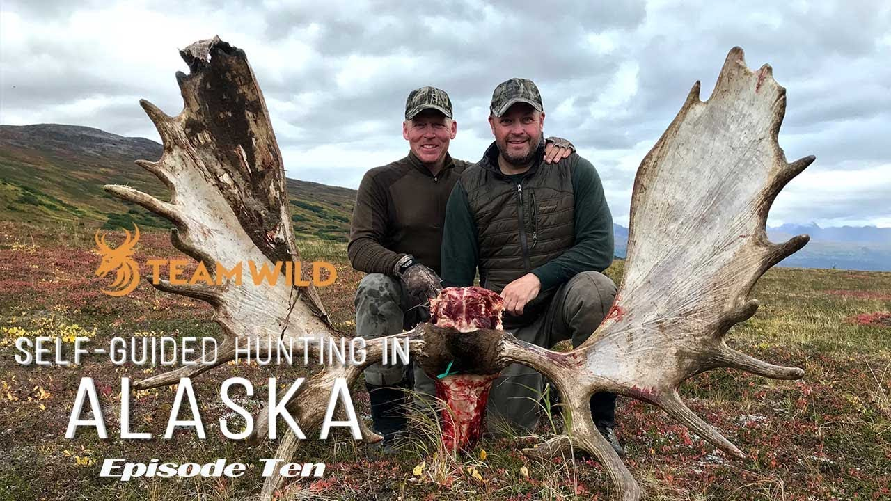Download Self-guided Moose & Caribou Hunting in Alaska: Episode 10 - Butchering and Packing Out a Bull Moose