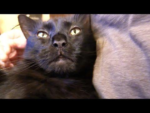 3 Mins of Happy Cat Purring