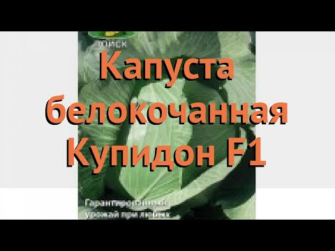Капуста белокочанная Купидон F1 (kupidon f1) 🌿 обзор: как сажать, семена капусты Купидон F1