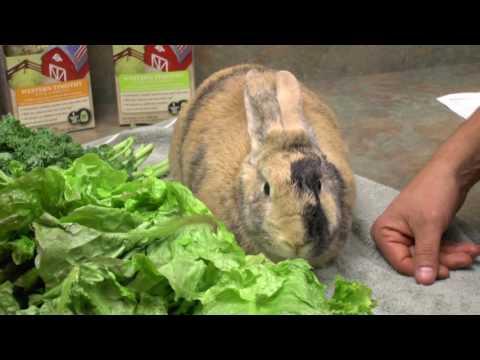 Fresh Greens for Herbivores