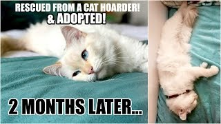 2 MONTHS AFTER CAT ADOPTION! My Cat is a Psychic!? | Louise Update!