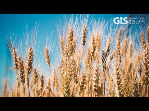 The benefits of GMO | Global trends video reports