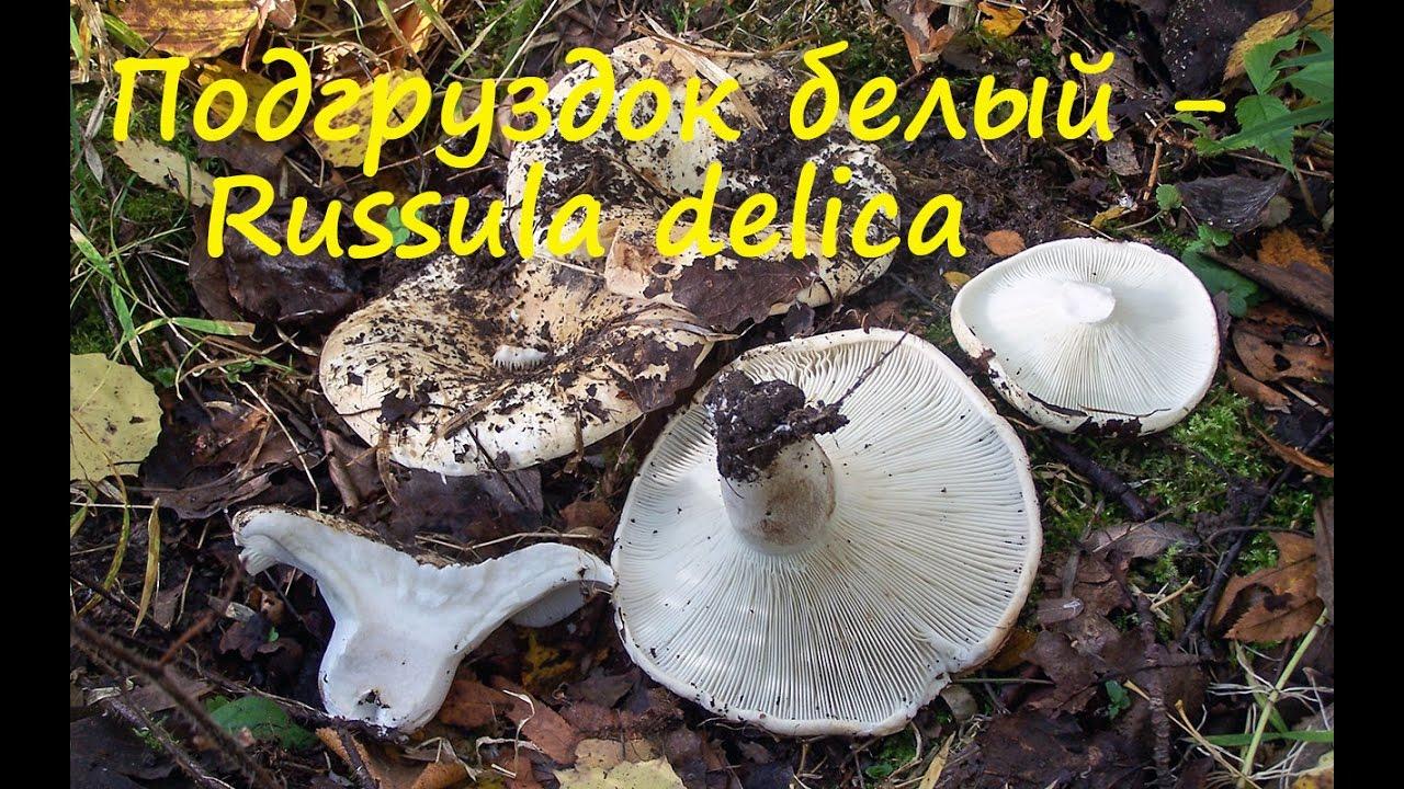 как готовить грибы подгузники