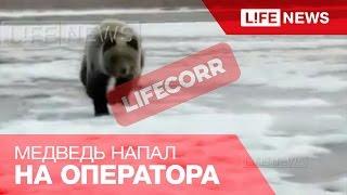 Медведь напал на людей, которые снимали его на видео