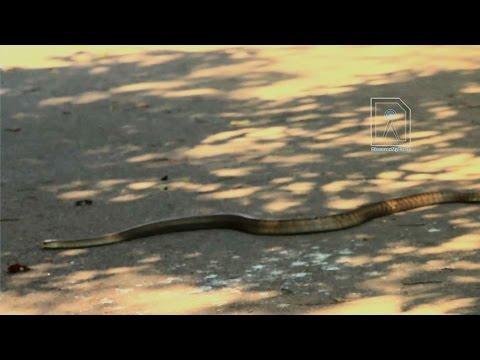 Biggg Snake !!!  Lalbagh Botanical Garden Bangalore
