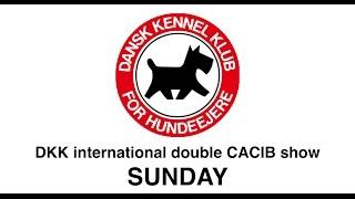 DKK - Double CACIB show - Sunday