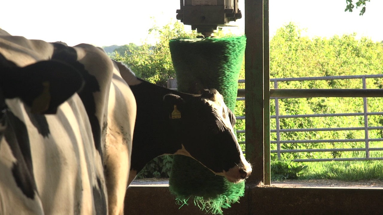 Dairy - Countryside Online | Countryside Online