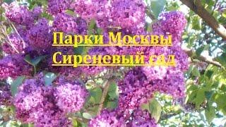 Смотреть видео Парки Москвы. Сиреневый сад на Щелковском шоссе онлайн