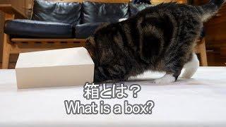 箱とは何かを教えるねこ-maru-teaches-what-is-a-box