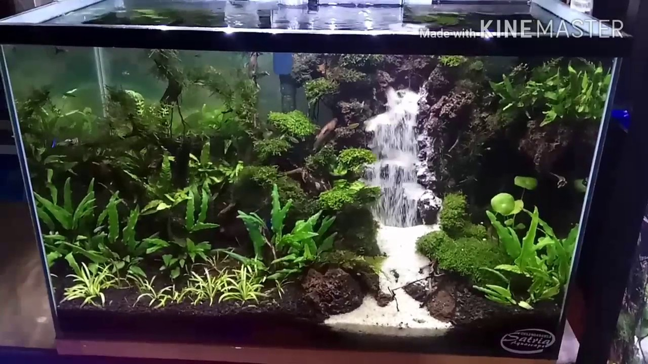 Waterfall aquascape tank 35*35*60(airterjunpasir) - YouTube