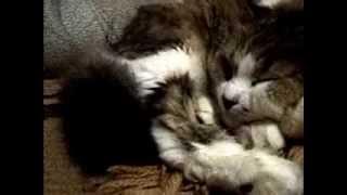 Кошечка-Милашечка......