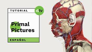 DOTLIB - Primal Pctures - Nuevo Tutorial en Español