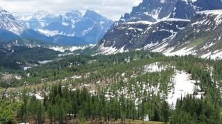 『旅人ゆき』の「2017年6月29日のヒーリーメドウ;黄色のカタクリ花畑」Glacier Lily thumbnail