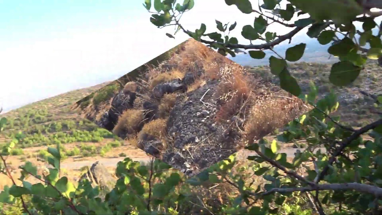 Download 2019 FASSA AVI-3.Caza Palomas Torcaces y Tortolas.PİGEON HUNTİNG İN CYPRUS