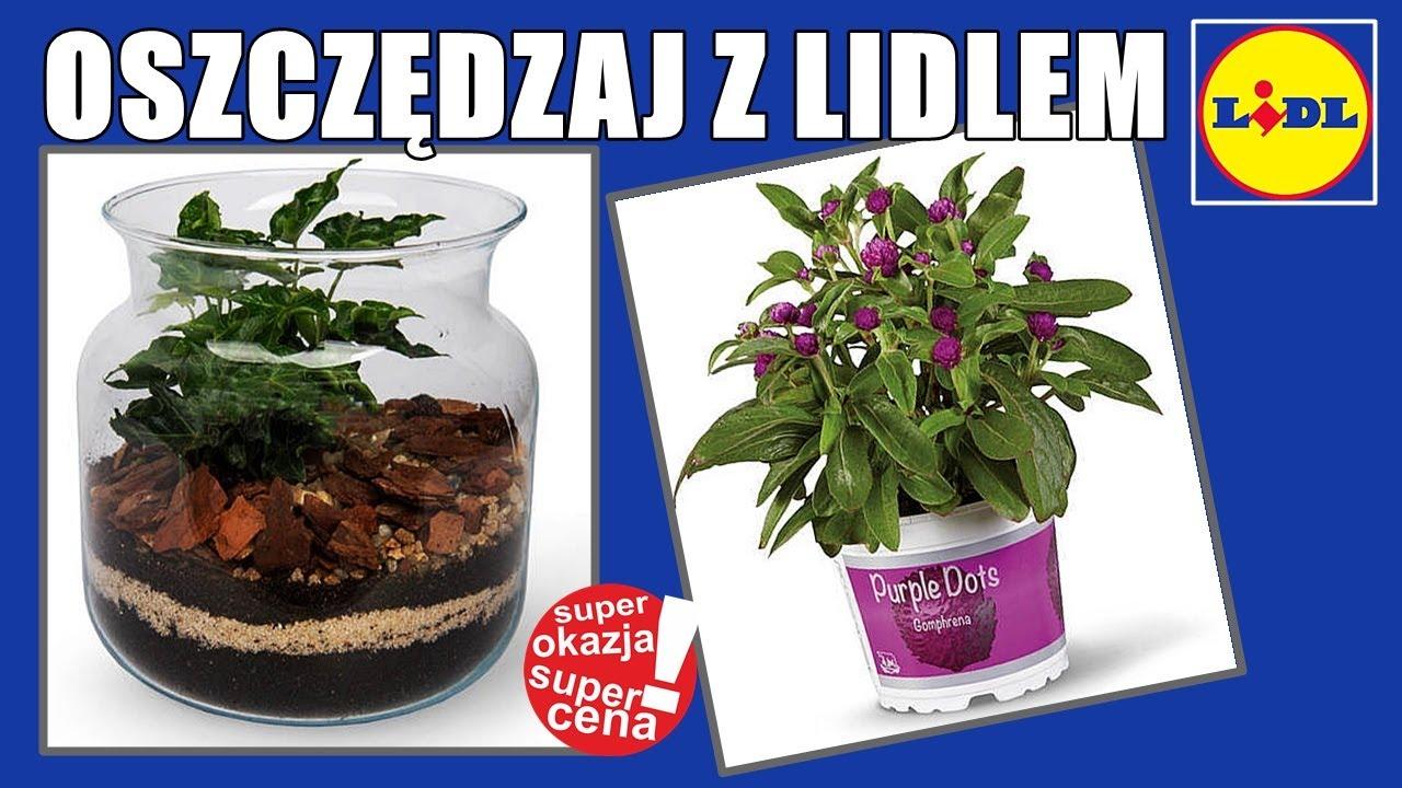 Nowa Gazetka LIDL od Czwartku 13.08.2020 | Oszczędzaj z Lidlem
