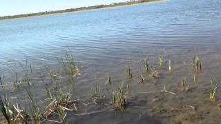 Жанакорган рыбалка