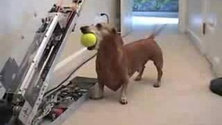Tento pes sa zabaví aj sám