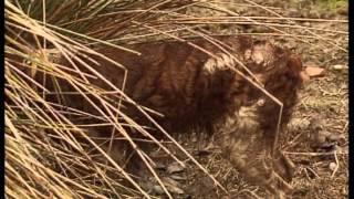 Jara y Sedal | Población de conejo
