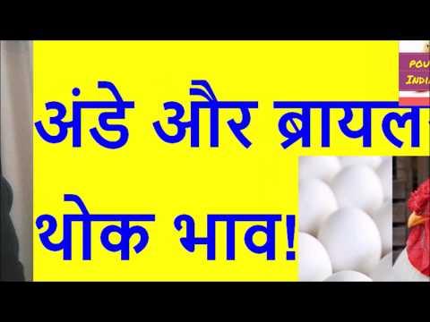 हरियाणा ब्रायलर चिकन थोक भाव संभला ! 25 5 2018 Haryana Rates | Poultry India TV