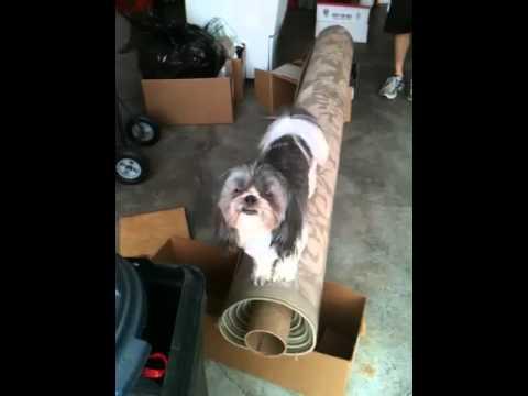 Circus dog Maggie