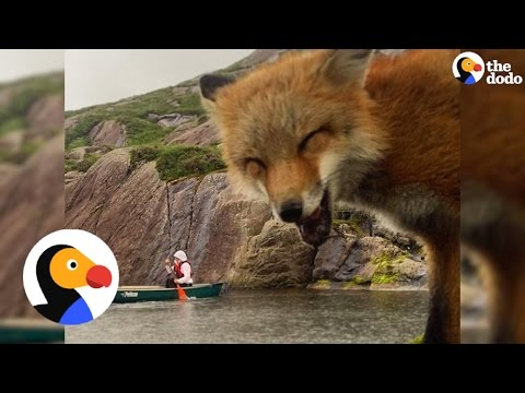 Baby Fox Saved From Fur Farm Goes Hiking Now | The Dodo