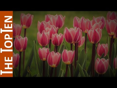 Images of pink flower bouquets