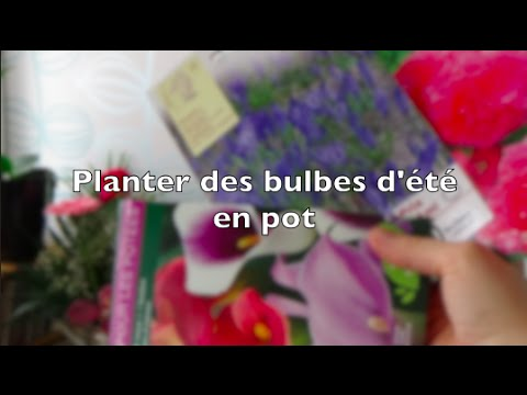 planter des bulbes d 39 t en pot pour le balcon arum begonia triteleia youtube. Black Bedroom Furniture Sets. Home Design Ideas
