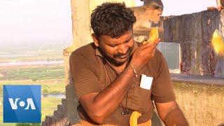 Fruit Vendors Feed 1,000 Hungry Monkeys Amid Lockdown in India