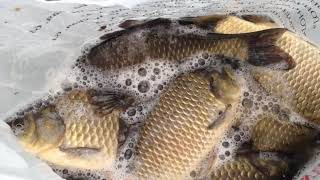 Поехали за карасиком а поймали ЗДОРОВЕННОГО Рыбалка на мормышку в камыше