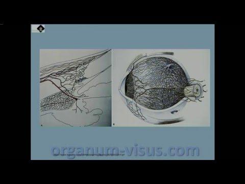 Glaucoma. Ингибиторы карбоангидразы в терапии глаукомы, 1, Голубев С.Ю.
