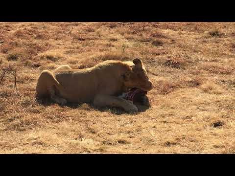 Lions Park Johannesburg, South Africa