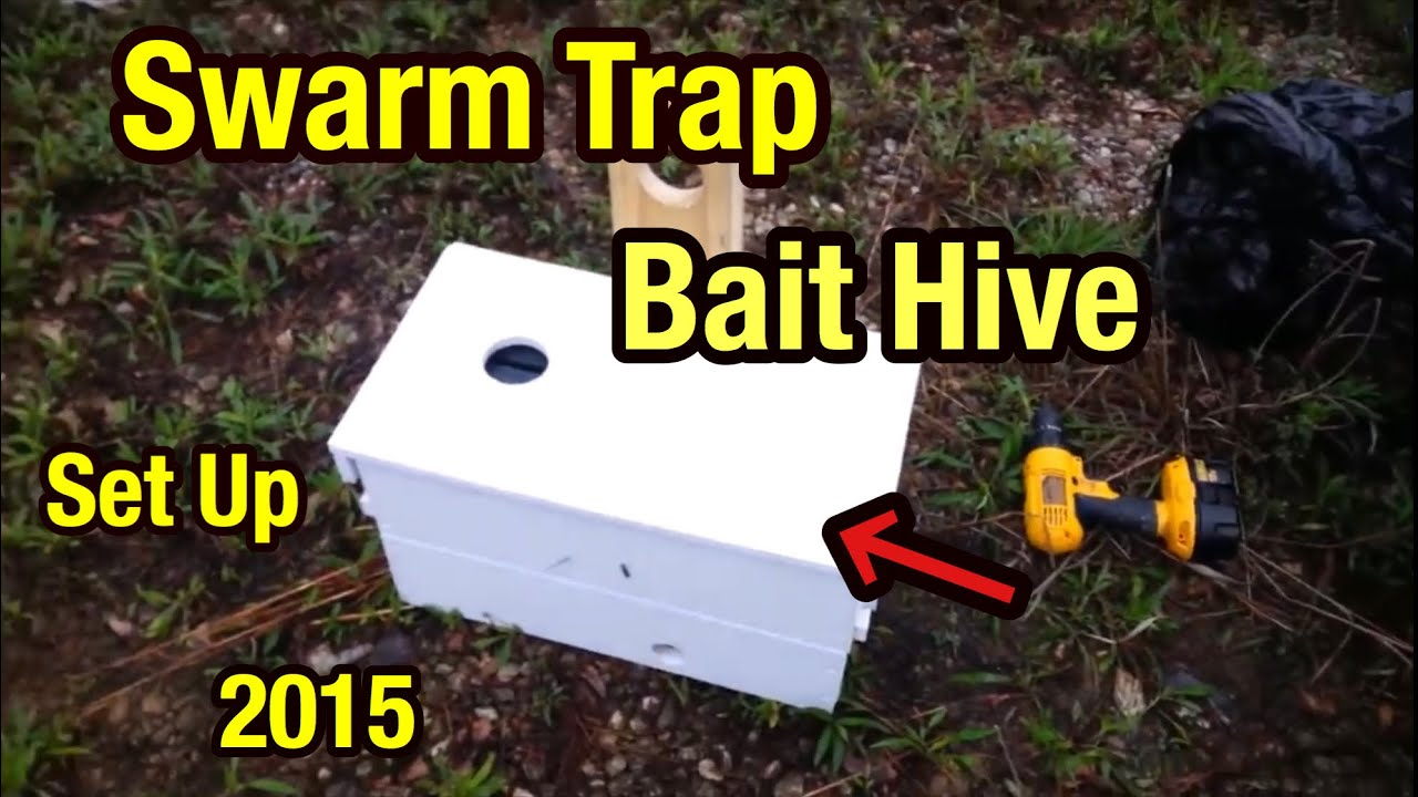 Swarm Trap Bait Hive Set Up For Honey Bees