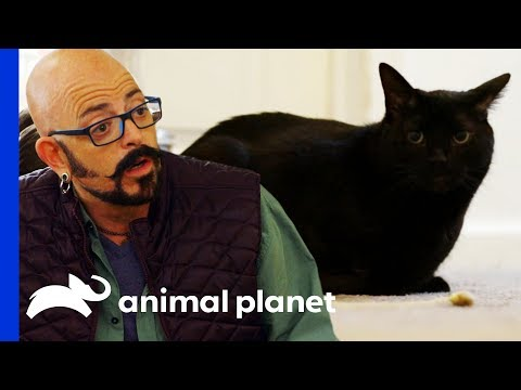 Therapy Cat Needs Help Getting His Confidence Back | My Cat From Hell