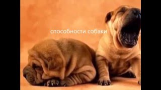 Топ 5 Собаки Способности
