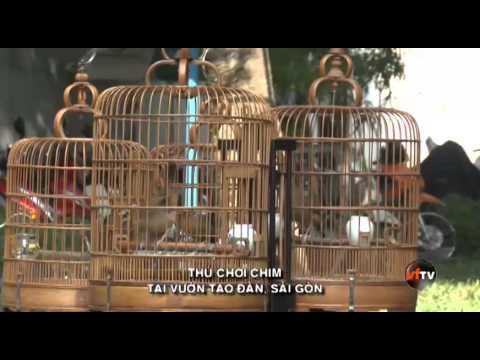 Nuôi Chim VFTV