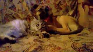 Ричик и Мир (совместный диван для сна) котёнок и щенок
