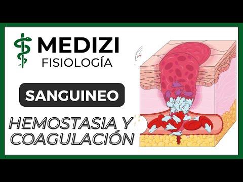 Clase 36 Fisiología Sanguínea - Hemostasia y coagulación (Plaquetas)